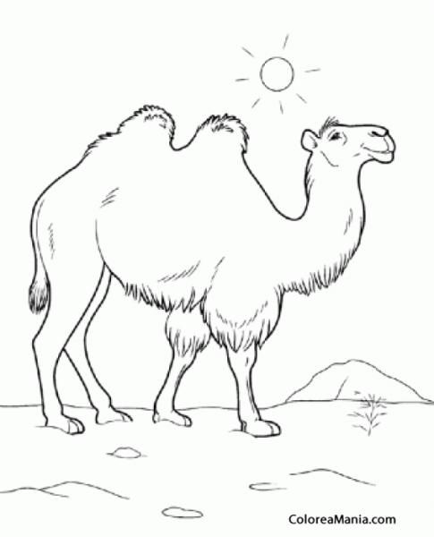 Colorear Camello Bajo El Sol (animales Del Desierto), Dibujo Para