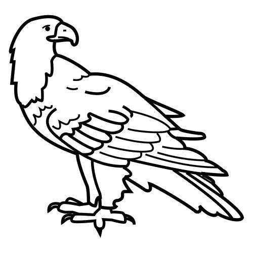 Aguilas Para Colorear En Caricatura
