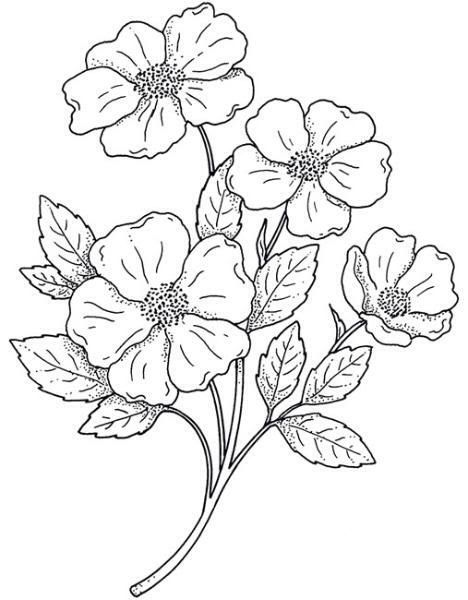 Resultado De Imagen Para Flores Para Pintar En Tela Moldes