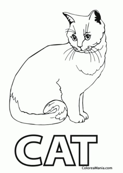 Colorear Gato  Is Cat In English (animales Domésticos), Dibujo
