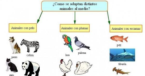 Resultado De Imagen De Animales Con Plumas Pelos Y Escamas Para