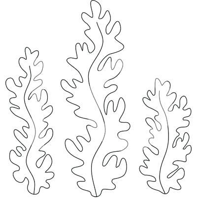 Dibujos Para Colorear Algas