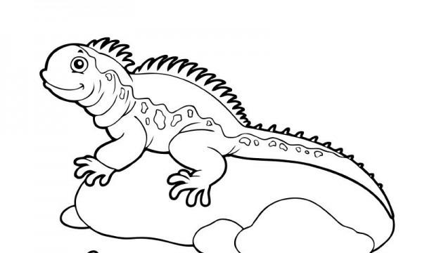 Iguana Infantil Para Colorear