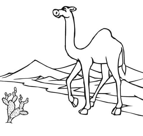 Dibujo De Camello Atravesando El Desierto Para Colorear