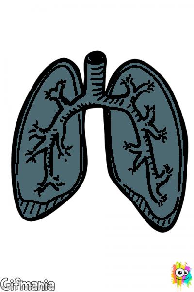 Pulmones En 2019