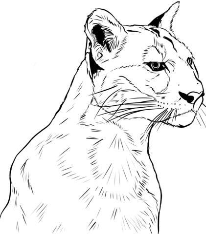 Dibujo De Rostro De Un Puma Para Colorear
