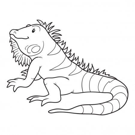 ᐈ Iguana Para Imprimir Imágenes De Stock, Dibujos Iguana Para