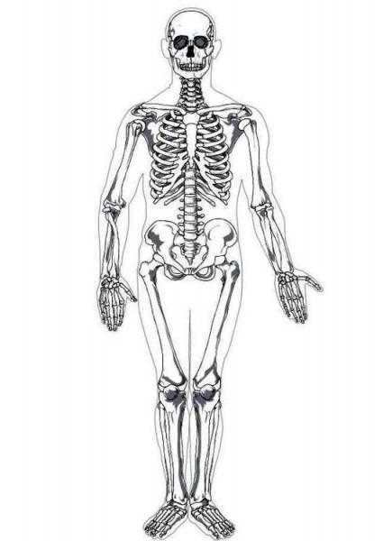 Dibujo Para Colorear Esqueleto Humano