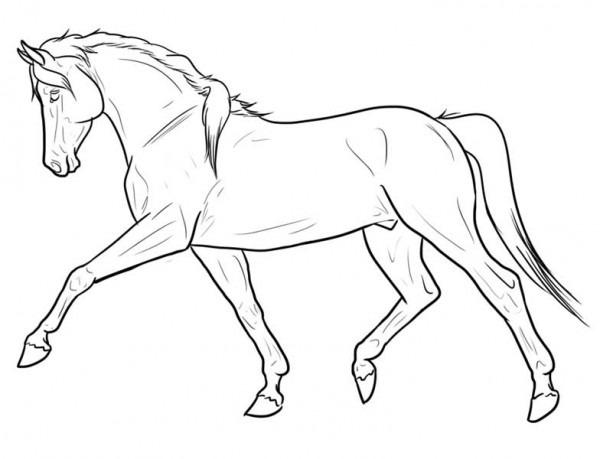 ▷ Dibujos De Caballos Para Adultos «caballos Para Colorear Los Niños»