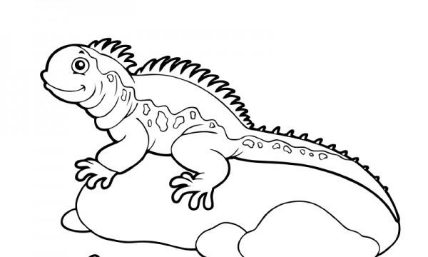 Dibujos De Iguanas (para Colorear Y Pintar)
