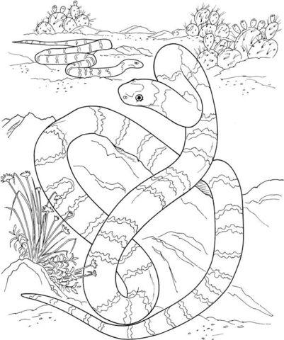 Una Larga Serpiente En El Desierto Dibujo Para Colorear