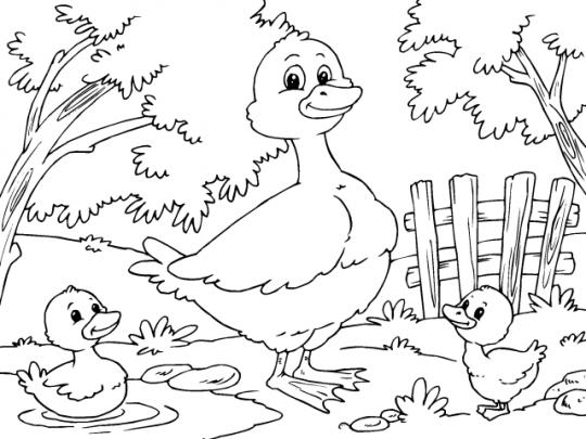 Pato Para Colorear