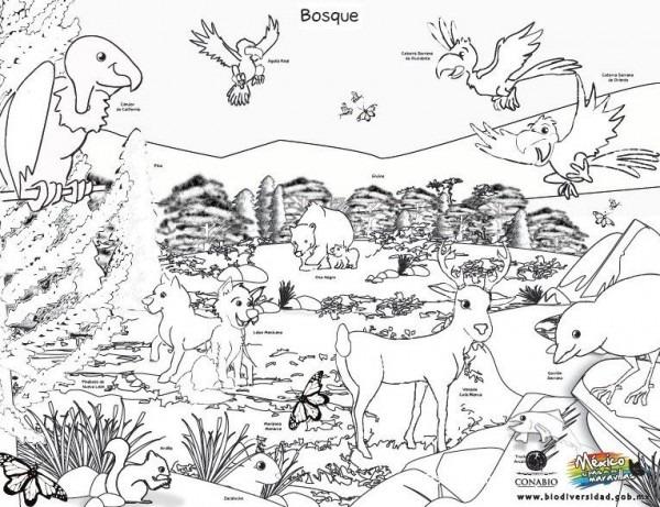 Espectaculares Dibujos De Los Ecosistemas