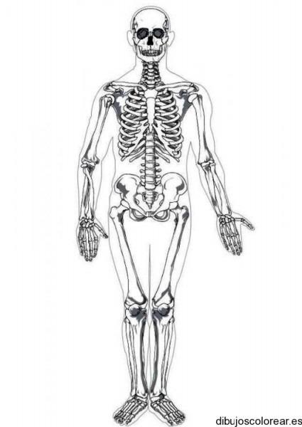 Dibujo De Un Esqueleto Humano Grande