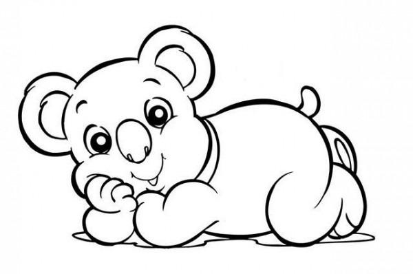 Blog Megadiverso  Koalas Para Descargar Y Pintar