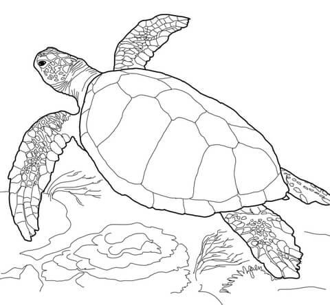 Dibujo De Tortuga Marina Cabezona Para Colorear