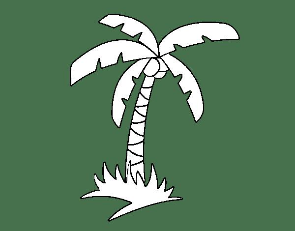 Dibujo De Palmera Tropical Para Colorear