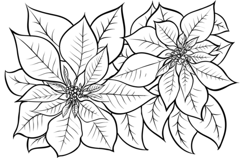 Dibujo De Flores De Pascua Para Colorear