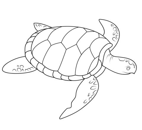 Dibujo De Tortuga De Mar Para Colorear