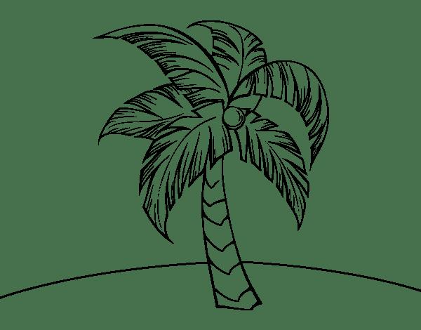 Dibujos De Palmeras Para Colorear
