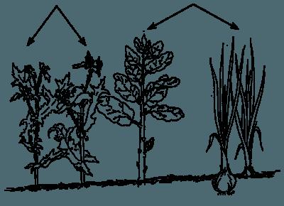 Control De Plagas Y Enfermedades De Las Plantas