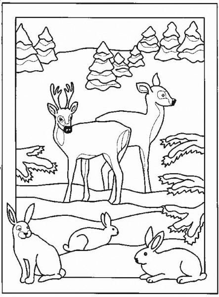 Dibujos Para Colorear  Dibujos Para Pintar  Dibujos Para Imprimir