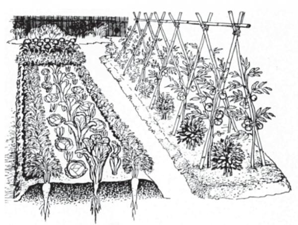 Asociaciones De Cultivos En La Huerta Orgánica  Qué Es, Beneficios