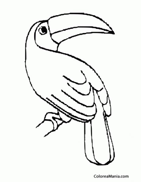 Colorear Tucán Medio Girado (aves), Dibujo Para Colorear Gratis