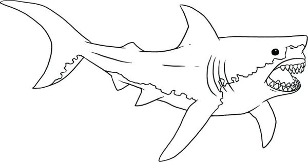Image Of Dibujos Para Colorear Tiburones Asesinos ▷ Dibujos De