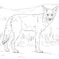 Imagenes De Coyotes Para Colorear
