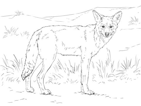 Dibujo De Coyote Para Colorear