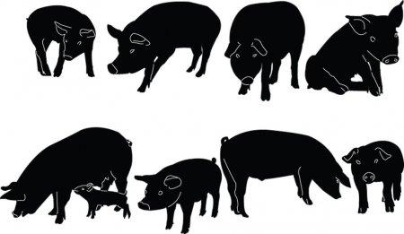 ᐈ Ganado Porcino Para Colorear Imágenes De Stock, Vectores