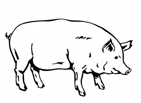 Dibujos De Porcino