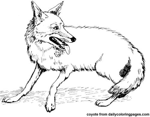 Coyote  33 (animales) – Páginas Para Colorear