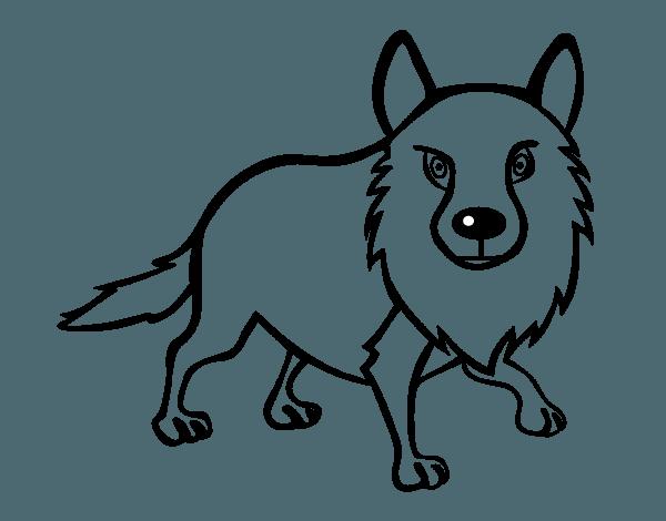 Dibujo De Coyote Adulto Para Colorear