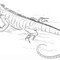 Iguana Animada Para Colorear