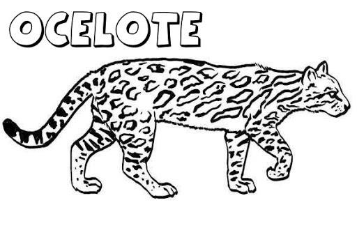 Ocelote Para Colorear