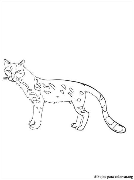 Dibujo De Ocelote Para Colorear E Imprimir