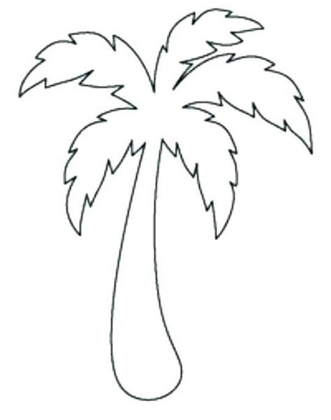 Palmera Canaria Para Colorear