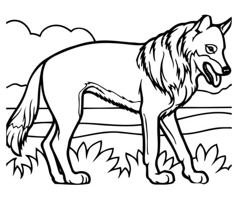 Dibujo De Coyote Realista Para Colorear