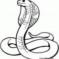 Reptiles Para Colorear