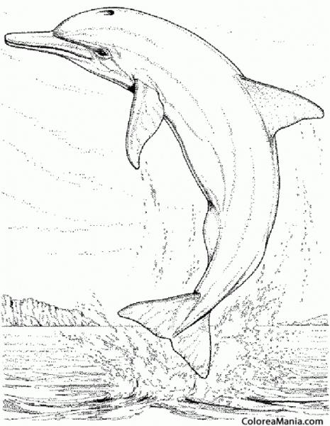 Colorear Delfín Saltando  Dibujo Realista (animales Marinos