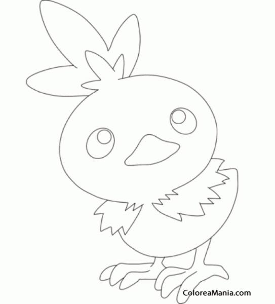 Colorear Torchic  Generation Iii Pokemon (pokemon), Dibujo Para