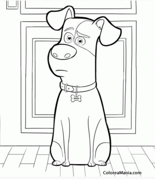 Colorear Max (mascotas (2016)), Dibujo Para Colorear Gratis