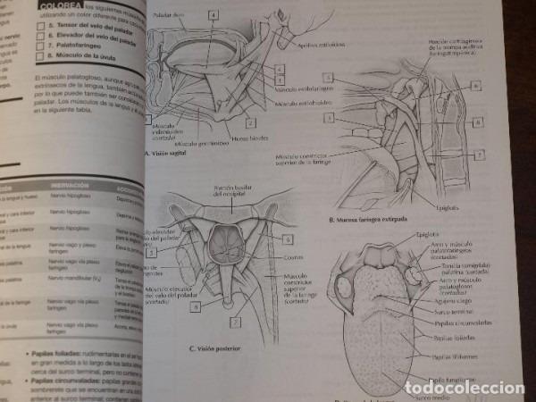 Cuaderno De Anatomia Para Colorear Netter  John