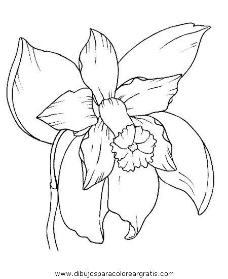 Naturaleza Flores Orquidea_orquideas_1 Jpg