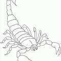 Dibujos De Escorpiones Para Colorear E Imprimir