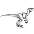 Dinosaurio Velociraptor Para Colorear