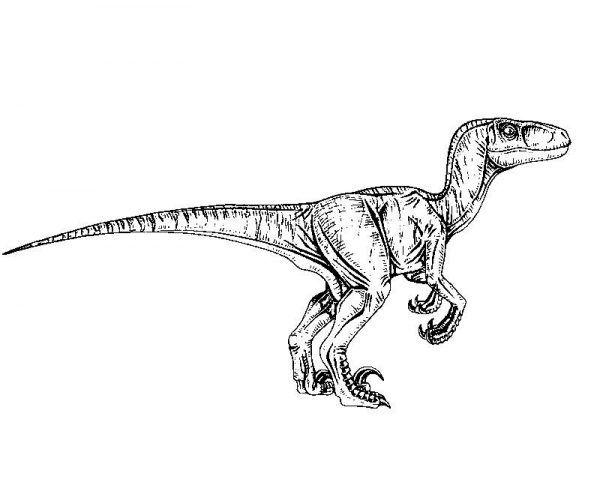 Jurassic Park Velociraptor Coloring Page