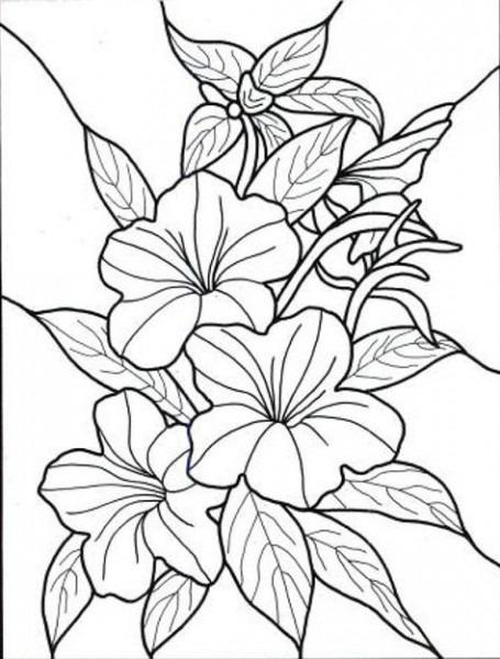 Dibujos Para Colorear De Flores Exoticas …